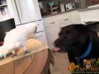 Papuga karmi psa
