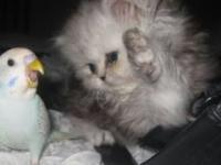 Koty I Psy Vs Papug - Kompilacja Śmieszne I Słodkie Zwierząt