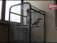 Papuga, która klnie jak szewc