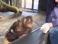 Zabawna małpka