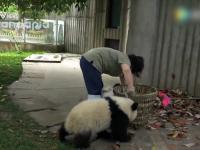 Sprzątaczka i niepokorna panda