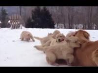 Psia mama i dzieciaki
