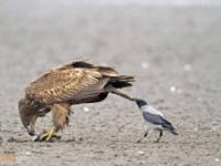 Niegrzeczny ptak