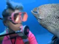 Nurkowanie z rybami