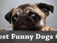 Zwierzaki bywają śmieszne