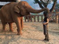 Słoń zasypia po tym jak opiekunka zaśpiewała mu kołysankę