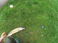 Wiosenny szczupak uciekinier - 75 cm