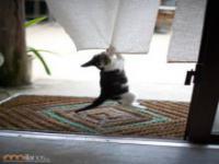 Kompilacja zdjęć kotów
