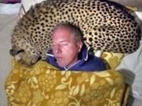 Facet używa geparda jako poduszki