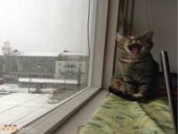 Kompilacja zdjęć kotów 2
