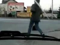 Atak bobra na środku skrzyżowaniu