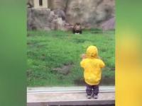 Lew rzucił się na chłopczyka w ZOO