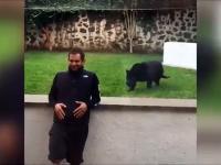 Pantera rzuca się na człowieka w zoo. Tym razem brak szyby