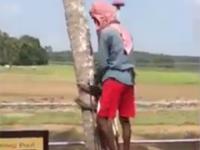 Jak wchodzić na drzewa