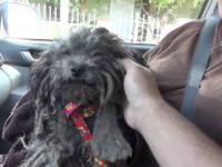 Przemiana porzuconego psa