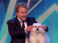 Pies w Brytyjskim Mam Talent