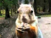Przyjazne i głodne wiewiórki