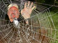Najmocniejsza sieć pajęcza
