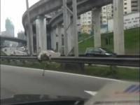 Struś uciekał autostradą w Malezji
