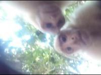 Małpa ukradła GoPro