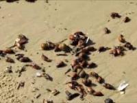 Chrząszcze na brzegu morza