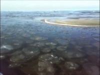 Lodowe krążki na morzu (Jantar)