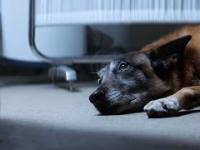 Nie porzucaj swojego psa! - Niezwykle poruszający spot organizacji broniącej praw zwierząt