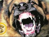 Złota Piątka: Najbardziej agresywne psy świata!