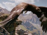Extremalny downhill orła na kozicy północnej