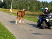 kto ma zabrać konia z drogi biegu masowego? organizatorzy? policja? nie! gapia-fotoamator