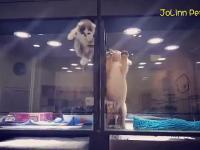 Sprytny kociak ucieka do swojego czworonogiego przyjaciela