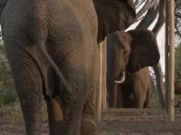 Słoń i lustro