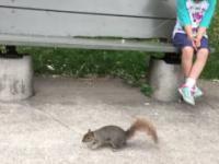 Wyrywanie zęba z pomocą wiewiórki