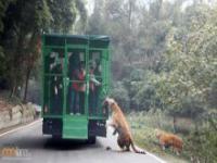 Zoo w którym to ludzie są w klatkach