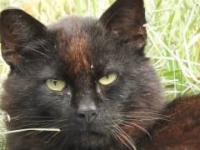 wnikliwe spojrzenie czarnego kota