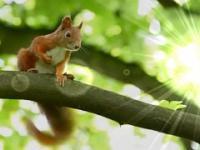 BAJKA O WIEWIÓRCE I DRZEWIE / TALE OF A SQUIRREL AND A TREE