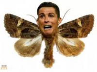 Najlepsze memy po finałowym meczu Mistrzostw Europy Francja - Portugalia