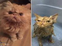 Zwierzęta po kąpieli