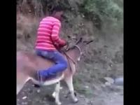 Odpalanie osła