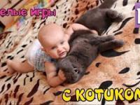 Zabawna gra z kotem