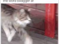 Kocie ruchy kotka