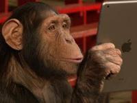 Oszukiwanie małpy :)