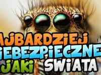 5 | Najniebezpieczniejszych pająków świata | SpinkaFun