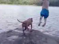 Reakcja psa na skok właściciela do wody