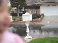 Malutka azjatka pierwszy raz poczuła deszcz