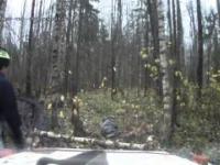 Rosjanin vs Drzewo