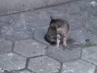 Najgłupszy kot na świecie!