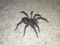 O, pająk! Spróbuję go dotknąć...