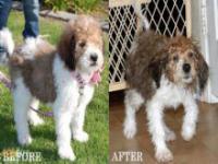 Psy przed i po kąpieli