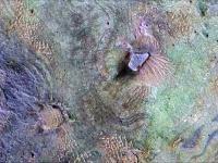 Najnowsze zdjęcia marsa dodane przez NASA w kompilacji